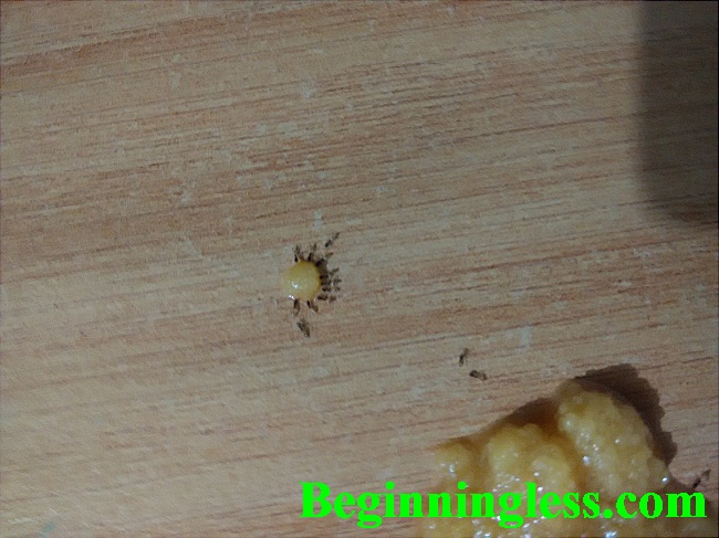 The very tiny ants that were annoying.